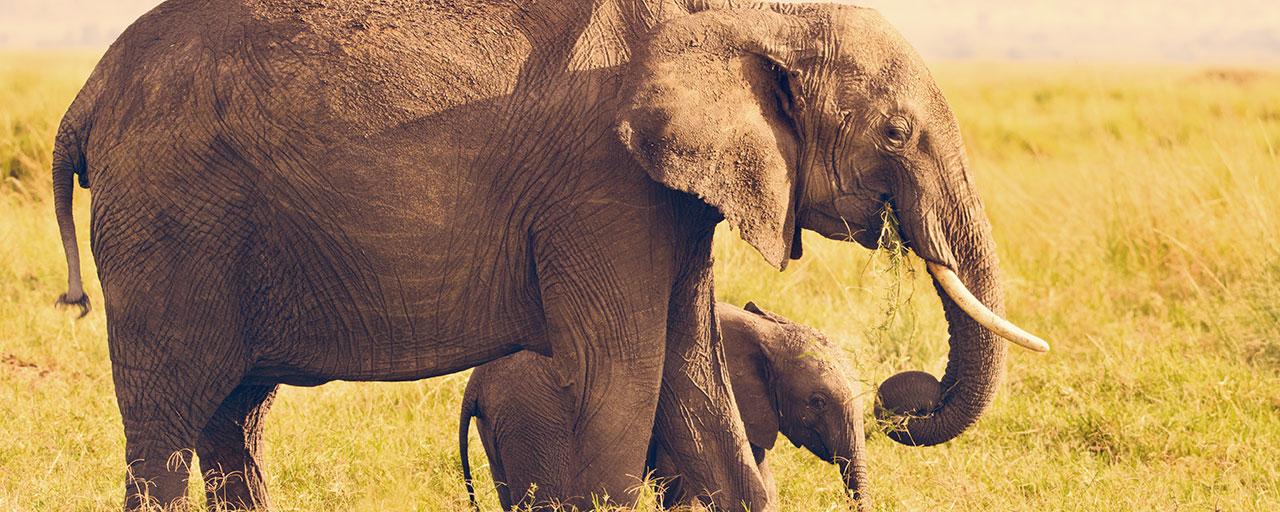 7d668cec36f1 Governor Cuomo Signs Legislation to Protect Elephants | Governor Andrew M.  Cuomo