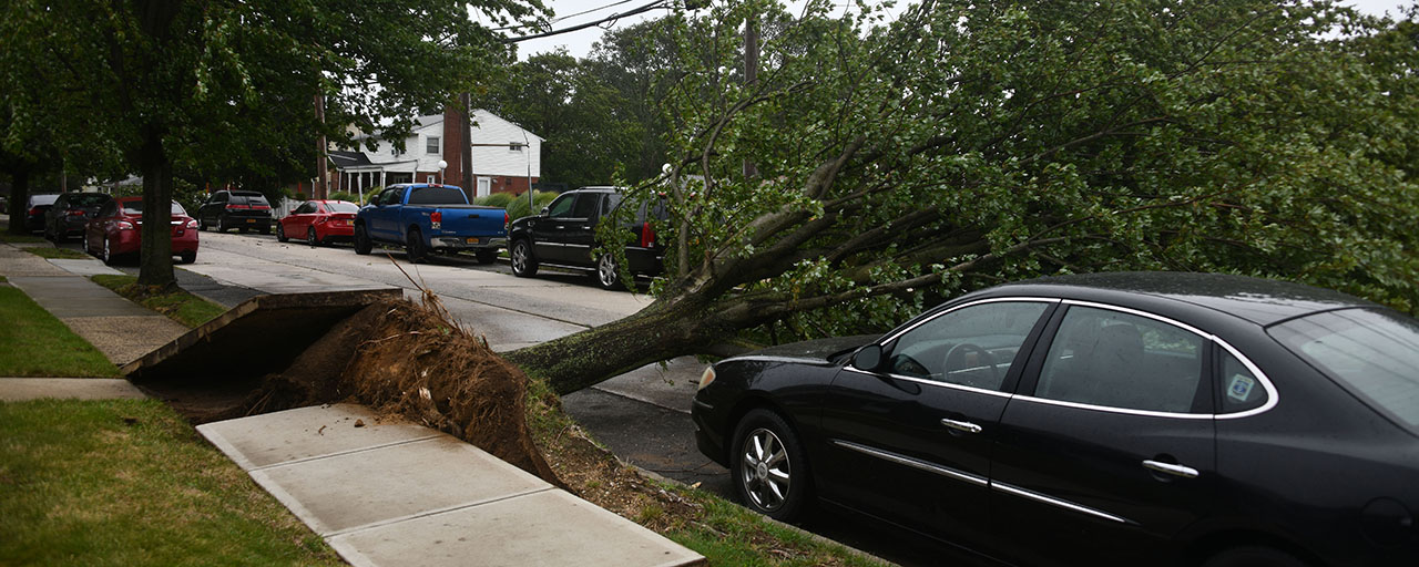 Isaias tree uprooted storm 1280.'
