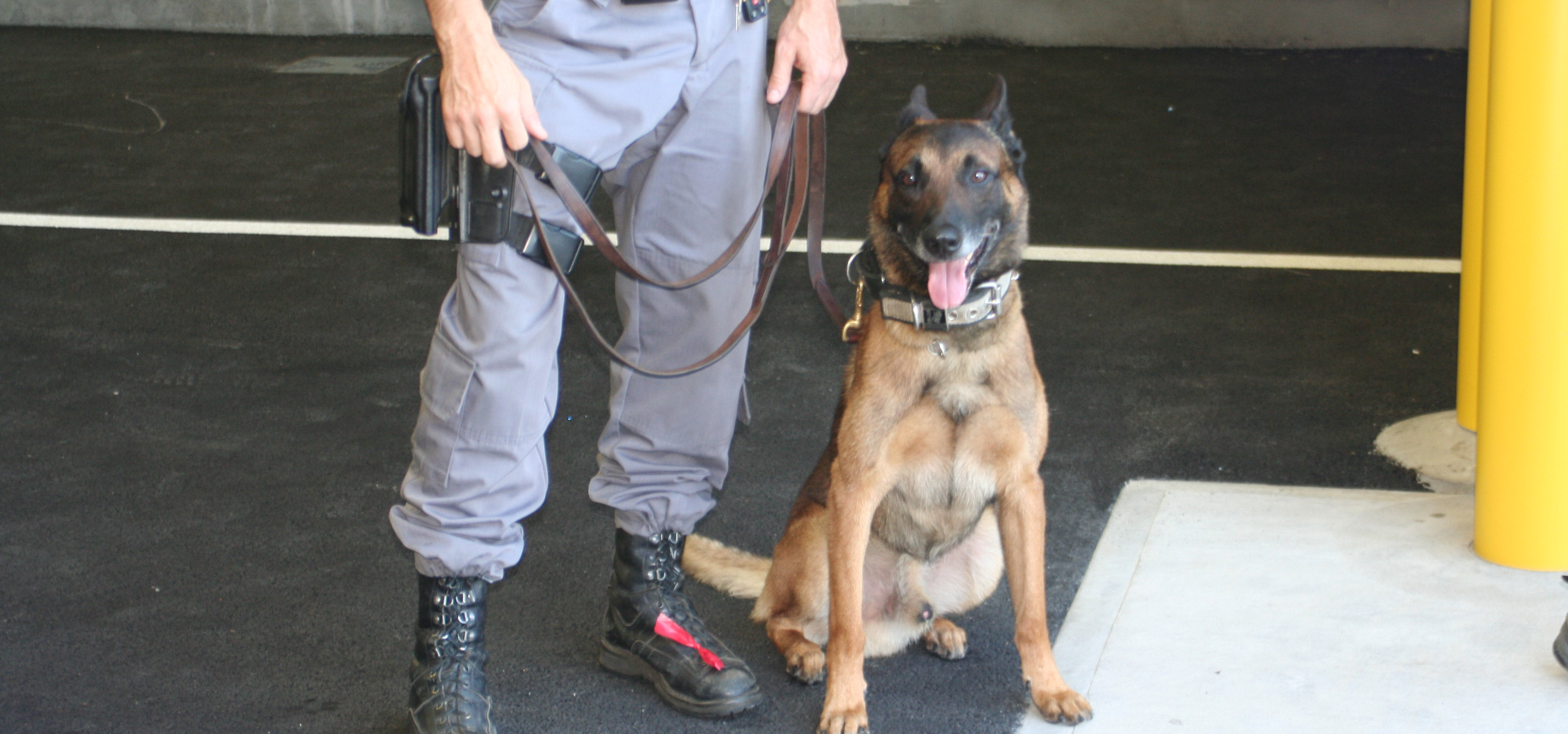 Detection Dog Training Equipment
